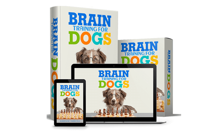Brain Training For Dogs Review – An Efficient Course To Have A Really Well Behaved Dog?