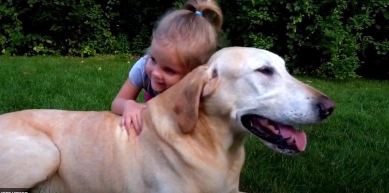 Ellevet Hemp CBD oil for dogs